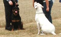 Chiot avec des chiens